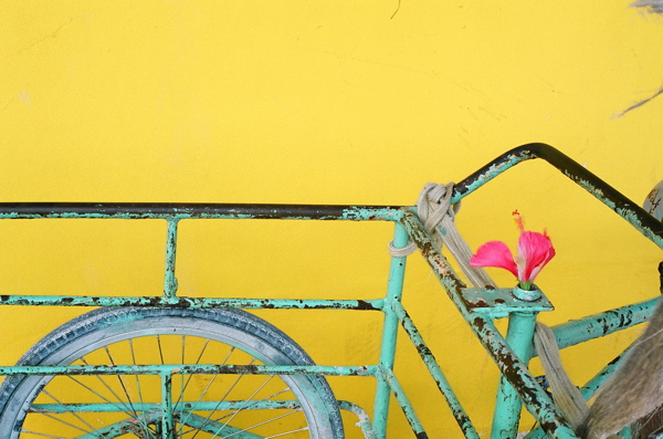 A vendor's utility bicycle with an ornamental flower in Caye Caulker, Belize.