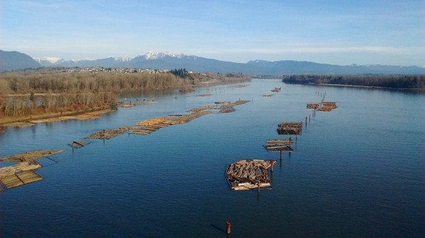 Log floats waiting to be moved and processed by nearby sawmills on the Fraser River, BC, Canada.