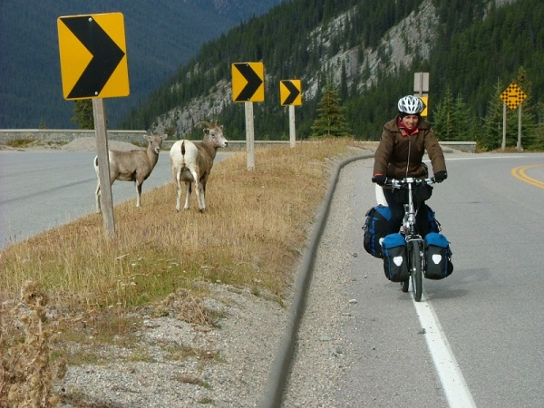 Ulrike pedalling a Dahon folding bicycle with Ortlieb bike panniers on the Icefields Parkway with two bighorn sheep looking on.