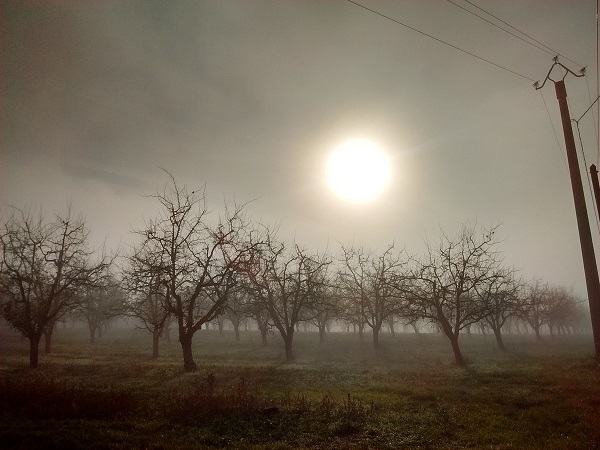 A hazy morning sun rises over a fruit orchard in southwest France.